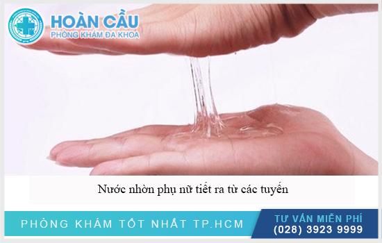 Nước nhờn của phụ nữ tiết ra từ các tuyến